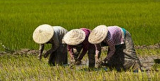 Reispflücker